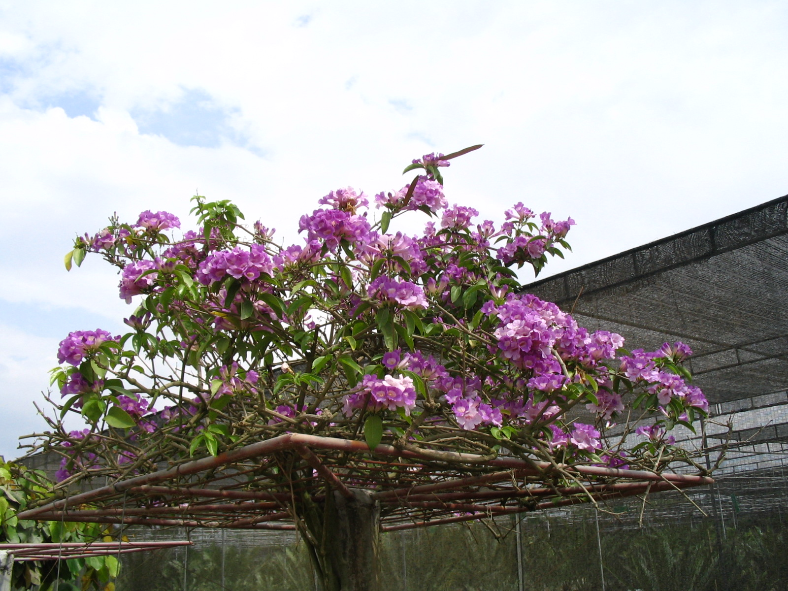 http://www.moisseenko.su/photo/Cambodia-Thai/Nooch/IMG_4803.JPG